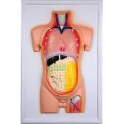 Human Torso, Bas Relief Model