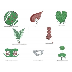 The Reproduction of Ferns Magnetic Demonstration Cards