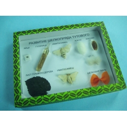 Product Name: Silkworm Life Cycle Specimen Collection Model NO.: B1002