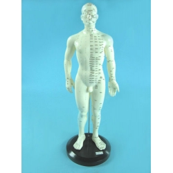 Male Acupuncture Points Model