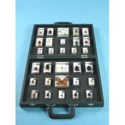 "Resin Educational Specimen""Collection of Various Zoological Representations 1"""