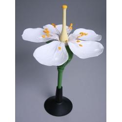 Apple Flower Model