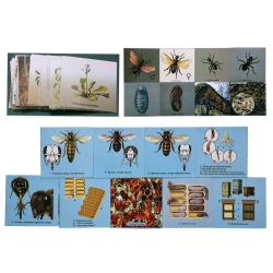 Biological and Insect Environments, Magnetic Demonstration Cards