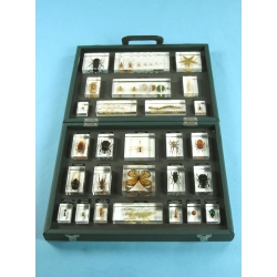 "Resin Educational Specimen""Collection of Various Zoological Representations 3"""