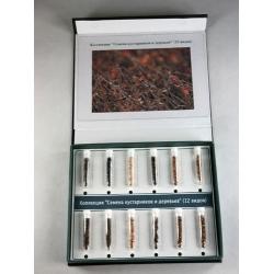 Seeds of Shrubs & Trees Herbarium - 12 Types