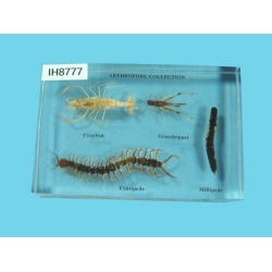 "Resin Educational Specimen""Arthropod Representation Collection"""