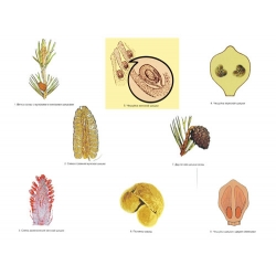 The Reproduction of Pines Magnetic Demonstration Cards
