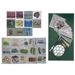Animal & Plant Cells, Magnetic Demonstration Cards