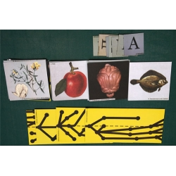 The Main Direction of Evolution, Magnetic Demonstration Cards