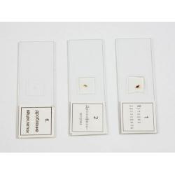 Microscope Slide Set