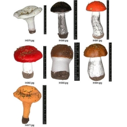 Mushroom Models Collection Set