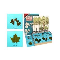 Leaf Representations Herbarium