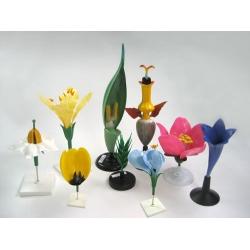 Flower Models