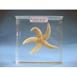 Immersed Specimen