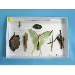 Insect Camouflage Sample Collection