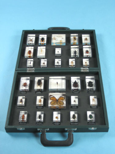 """Resin Educational Specimen""""Collection of Various Zoological Representations 1"""""""