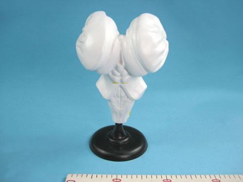 Brain Stem Model