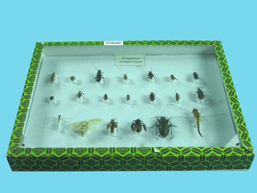 Helpful Insects Collection
