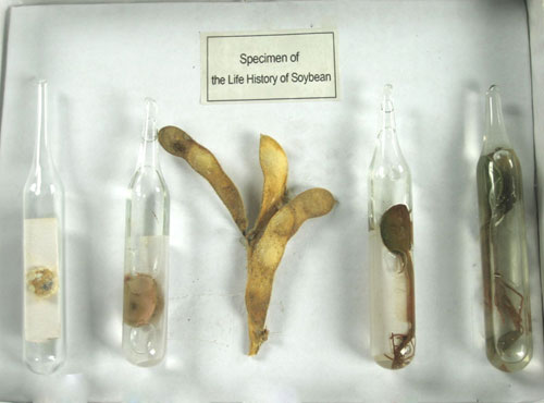 The Life Cycle of a Soybean Herbarium