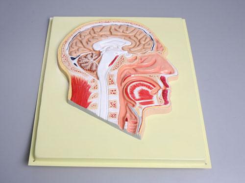 Human Head Bas Relief Model
