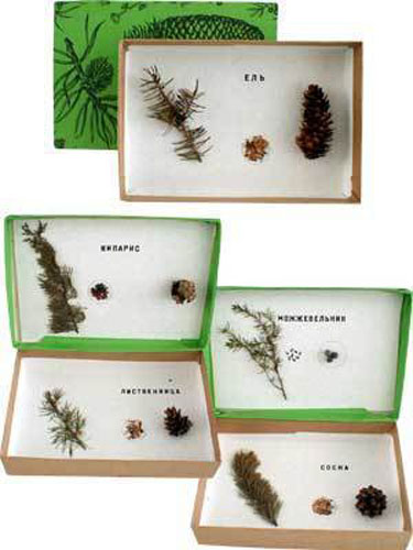 Pinales Tree Samples Herbarium - 5 Types