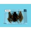 "Resin Educational Specimen""Bat Specimen"""