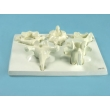 Vertebrae Bone Model Set