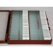 Microscope Slide Set for General Biology 3