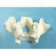 Nasal Bone Model