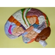 Human Brain Lobes, Bas Relief Model (E)