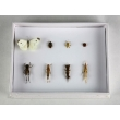 Harmful Field Insects Collection