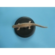 Water Lizard Model