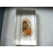 "Resin Educational Specimen""Sea Animal Representation Collection"""