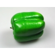 Green Bell Pepper Model