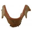 Animal's Teeth & Lower Jaw
