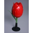 Tulip Flower Model