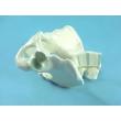 Male Pelvic Bones Model