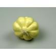 Garlic Bulb Model