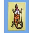 Lizard's Internal Structure