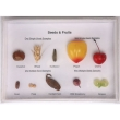 Imitation Fruit Specimen Collection