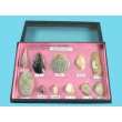 Seashell Samples Collection