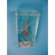 Shrimp Specimen