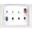 Harmful Forest Insects Collection