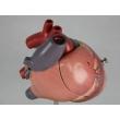 Dog Heart Model