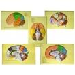The Human Brain (lobes, Convolutions, Cytoarchitectonic Fields)